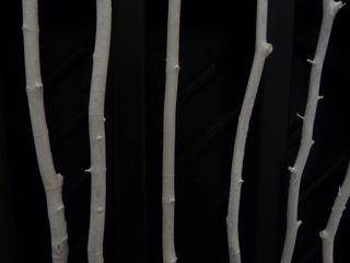 Tree Songs, close-up